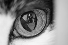台北寵物攝影 (cold0328) Tags: 寵物攝影 貓咪攝影 狗狗攝影 台北寵物攝影 cats kittens pets petstagram petsagram instagramcats lovecats adorable meow instacatmeows catofinstagram cateyes cutecats animals catstagram catsofinstagram catlove kittensofinstagram catlovers photography petsphotography