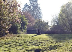 Serenity (Chapo78) Tags: dog nature freedom happy sunshine trees grass green proud calm