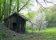 Secret place (Chapo78) Tags: cabane wood secret place nature green trees silent quiet hood hut cabin