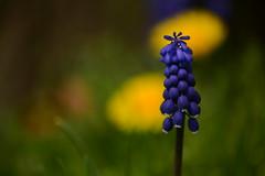 Blue for you... (jrmcmellen) Tags: blueforyou smilesonsaturday blueforyoume2019