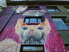 'Kitty' (Timster1973 - thanks for the 16 million views!) Tags: tallinn estonia graffiti street wall art wallart canon mirrorless colour timster1973 canonm3 canonmirrorless cat kitty building architecture colourful timknifton feline streetart