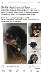 FOUND CAVALIER KING CHARLES FEMALE DOG. Taken to CAS this afternoon. Found in #CougarRidge area. Pls rt and share to help find her family. YYC Pet Recovery shared a post. Found dog in Cougar Ridge. Currently at South West Veterinary Hospital. 2019-04-16T2 (yycpetrecovery) Tags: ifttt april 17 2019 0111am