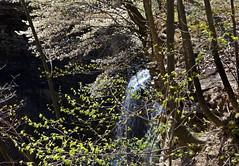 Waterfall in Spring (klauslang99) Tags: klauslang nature naturalworld northamerica canada niagara escarpment waterfall spring leaves bushes tree