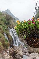 Sapa WaterFall in the background  with flower (wuestenigel) Tags: rock landscape asia river nature flower waterfall green fresh fall tropical travel natur water wasser landschaft wood holz leaf blatt noperson keineperson stone stein outdoors drausen flora reise summer sommer beautiful wunderschönen environment umgebung fluss wild tree baum fallen wasserfall color farbe