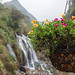 Sapa WaterFall in the background  with flower