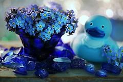 BLAUW BLUE BLAU BLU AZUL (Anne-Miek Bibbe) Tags: blueforyoume2019 smileonsaturday blauw blue blau blu azul speelgoed toy spielzeug giocattoli juguetes bringuedos jouets vergeetmijniet myosotis forgetmenot canoneos70d annemiekbibbe bibbe nederland 2019