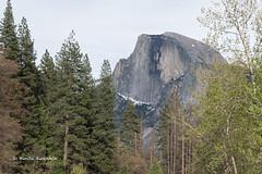 BK0_1295 (b kwankin) Tags: california halfdome yosemitenationalpark