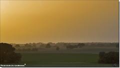 Al Atardecer (Antonio Zamora) Tags: antoniozamora amarillo arboles árboles árbol spain sky sunset spring sun sol skies españa eos7d eos encina paisaje paisajes primavera landscape landscapes llano llanura lamancha llanos manchuela marron marrón yellow naturaleza nature canon weather ocaso