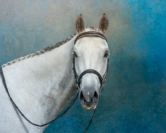 MJ Spring (danniearmstrong) Tags: texture horse mare teals gray