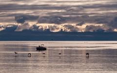 Boat (LarryJH) Tags: lake ontario birds bird seagull water reflections waves lakeontario