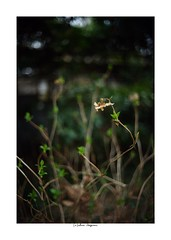 2019/3/16 - 5/15 photo by shin ikegami. - SONY ILCE‑7M2 / Voigtlander NOKTON CLASSIC 40mm f1.4 SC VM (shin ikegami) Tags: asia sony ilce7m2 sonyilce7m2 s7ii 40mm voigtlander nokton nokton40mmf14sc tokyo photo photographer 単焦点 iso800 ndfilter light shadow 自然 nature 玉ボケ bokeh depthoffield naturephotography art photography japan earth