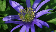 Zandberg (Omroep Zeeland) Tags: bloemen