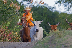 Boyero (cowboy) - Holguín Province, Cuba - Feb 2019 (Dis da fi we) Tags: boyero cowboy holguín province cuba drover cow cattle horn man horse