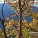 20190506-DAO_0205 秋天楓樹葉子的色彩