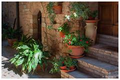 Dernière caresse du soleil (Pascale_seg) Tags: italie italia village spello ruelle rue strada soleil sun sole fleurs fiori flowers escalier ombrie umbria