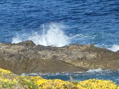 P1090313 (jesust793) Tags: mar sea rocas rocks olas waves water flores flowers