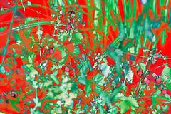 (psychedelic world) Tags: strawberries erdbeeren garden garten gras grass gräser pflanzen plants outdoor früchte fruits red rot green grün blätter leaves feld field flowers blumen wiese psychedelicworld psychedelic psychedelisch