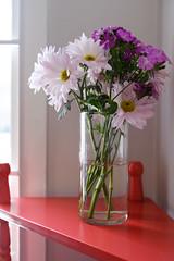 Robin's flowers (Marc Merlin) Tags: stilllife imanpark flowers dadasalon atlanta georgia unitedstates