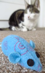 Blue mouse (Pat's_photos) Tags: toy mouse pet cat smileonsaturday blueforyoume2019
