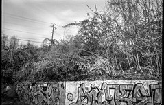 graffiti wall, vegetation, powerlines, River District, Asheville, NC, Nikon L35AF2, Kodak Tri-X 400, HC-110 developer, 4.1.19 (steve aimone) Tags: graffiti wall powerlines vegetation riverdistrict asheville northcarolina nikonl35af2 kodaktrix400 hc110developer pointandshoot compactcamera 35mm 35mmfilm film monochrome monochromatic blackandwhite