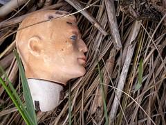 2019.0511 Trash Head (thatannemarie) Tags: may 2019 foundobjects ants doll