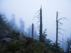 _1050037.jpg (tuehna) Tags: mummelsee hornisgrinde schwarzwald blackforest