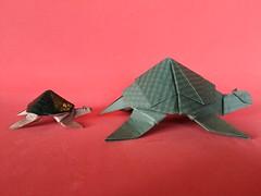 Turtle - Marc Vigo. (Stefano Borroni (Stia)) Tags: origami origamipaper origamicdo origamilove origamiart piegarelacarta arte folding foldingpaper papiroflexia carta animali natura wwf turtle tartaruga marcvigo cdoitalia