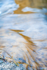DSC01113 (EverEvolvingStudio) Tags: sony a7ii katherine nature lake palos heights sunset water scenery pond trail