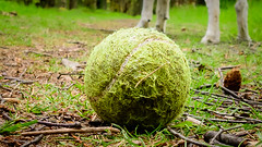 found object (grahamrobb888) Tags: birnamwood birnam woods woodland perthshire scotland spring sunny nikon nikkor d500 nikond500 nikkor105mmf18 fisheye fisheyelens