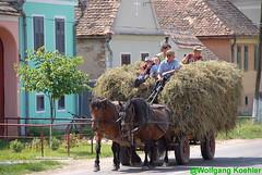 Days work:- Romania (elbigote1946) Tags: heuwagen ernte harvest cityofarad haywagon chariot carroforajero piledup