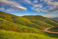 Verdant Hills (Bridget Calip - Alluring Images) Tags: 2019 alluringimagescolorado bridgetcalip california californiapoppies lakestreet riversidecounty scenicbyway superbloom usa walkercanyon allrightsreserved beautiful bloom blueskies botanical clouds copyrighted dramaticclouds field flora flower hiking hill landscape meadow moon orange outdoor plant poppyapocalypse poppygeddon recreation rollinghills sky southerncalifornia spring sunny touristattraction travel vibrant wild wildflowers
