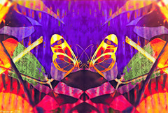 First Love (Lemon~art) Tags: mirrorimage colour butterflies manipulation gretaoto glasswingbutterfly lepidoptera