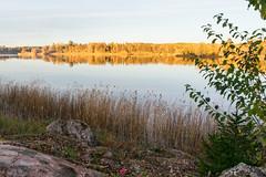 Marielund, Sweden (19-10-2018) (TijmOnTour) Tags: cabin lake forest trees leaves colour color fall autumn reflection landscape fjällnora trehörningen uppland uppsala sweden nature outdoors golden goldenhour sunset