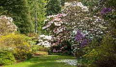 Inverewe Garden (San Francisco Gal) Tags: inverewe garden dell rhododendron flower tree spring westerross scotland 2019