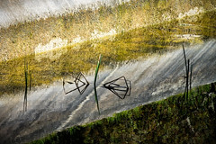 'On Reflection' (Canadapt) Tags: water pond grass reflection concrete wall sintra portugal canadapt