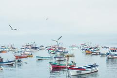 Caleta tumbes (Jeantoorres) Tags: tumbes regio del bio canon sea mar oceano pacifico t5 sheep bote botes day niebla cloud nubes