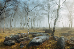 Peak District morning III (J C Mills Photography) Tags: peakdistrict derbyshire woodland trees birch mist misty morning winter landscape