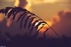 The Secret (gusdiaz) Tags: nature naturephotography canon canonphotography florida miami southbeach sunrise amanecer playa sal mar arena beach ocean sea salt salty life bokeh bokehlicious beautiful gorgeous sky clouds cielo nubes trigo