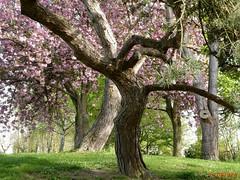 Sculptures d'arbres (FleurdeLotus28) Tags: arbre tree printemps spring nature sulpture landscape paysage pré prairie rose forme abstract abstrait photographie shot green vert eureetloir