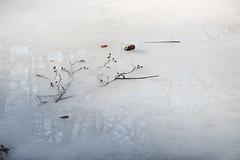 Lac des Picades, Saint-Chély d'Aubrac, Aveyron (lyli12) Tags: lac hiver ice glace reflet miroir aveyron aubrac midipyrénées paysage eau water