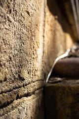 The wall (.Stephen..Brennan.) Tags: da35macro pentax pentaxk3 perth westernaustralia australia