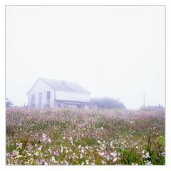 The Mist-- Point Reyes,California May 2018 (Sandra Jinyi Li) Tags: film 120 6x6 hassblad zeiss abandoned decay fujichrome barn