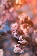 Spring (viktórianagynépetró1) Tags: spring springtime flowers flower naturephoto naturelovers nature lights macro macrophoto macrodreams