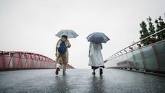 Fuyang Eco Park (リンドン) Tags: fuyang eco park taipei taiwan fujifilm xt2 fuji 16mm xf 台北 台湾 公園 雨 傘 橋 umbrella rain bridge