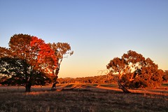 Still no rain. (Ian Ramsay Photographics) Tags: cumnock newsouthwales australia day dry parched landscape centralwesternnewsouthwales drought rain trees