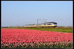 NSR-2980+2114_Hil_14042019 (Dennis Koster) Tags: nsr ns trein personentrein passagierstrein bollenveld hillegom sgmm 2980 2114