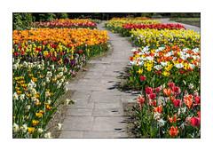 Frühlingsbeete (Pippilotta aus dem Tal) Tags: sel90m28g