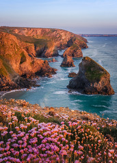 Bedruthan Thrift (Rich Walker Photography) Tags: cornwall coast coastline coastal thrift flowers sea ocean landscape landscapes landscapephotography seascape seaside seascapes england canon efs1585mmisusm eos eos80d