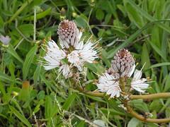 P1050737 (jesust793) Tags: flores flowers primavera spring