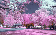 pink park (Dhina A) Tags: sony nex7 fullspectrum converted infrared ir 590nm variotessar t fe 1635mm f4 za oss sel1635z heliopan orange 22 coated filter slim